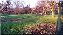 TQ2780 : Last of the winter sunlight in Hyde Park by David Martin