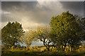 NY5176 : Windfall by James Johnstone