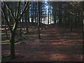 SD4187 : Footpath through Rankthorns Plantation by Karl and Ali