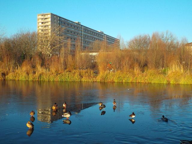 Ducks on a frozen lake, Burgess Park