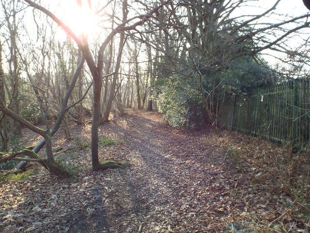 Sunlight and shadows, near Oxted