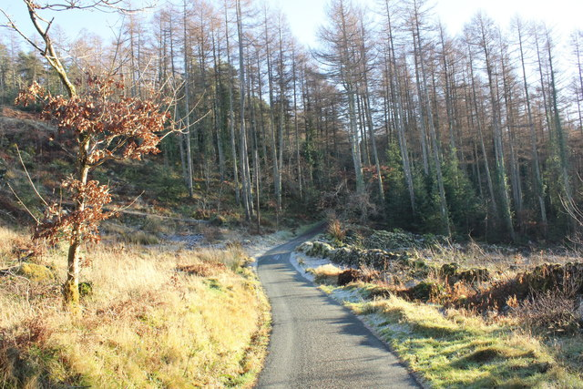 Coed-y-Brenin Forest Track