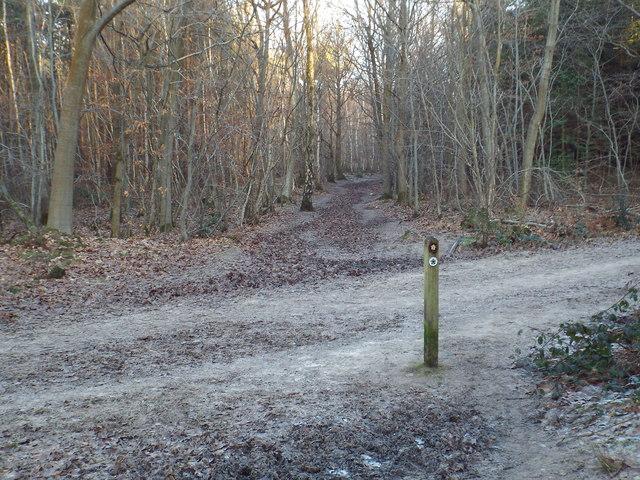 Greensand Way near Westerham