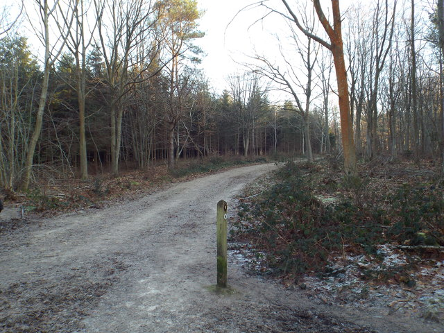 Track through High Chart, near Westerham
