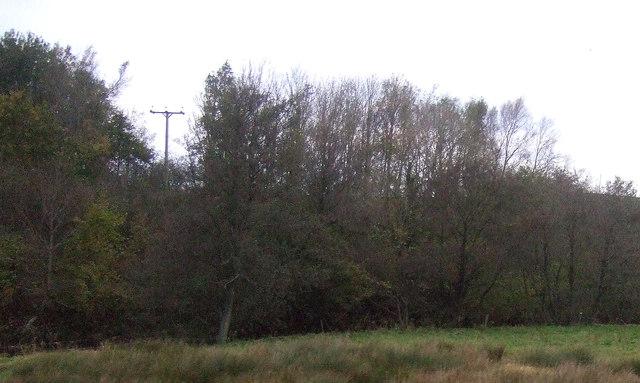 Woodland near the River Ellen