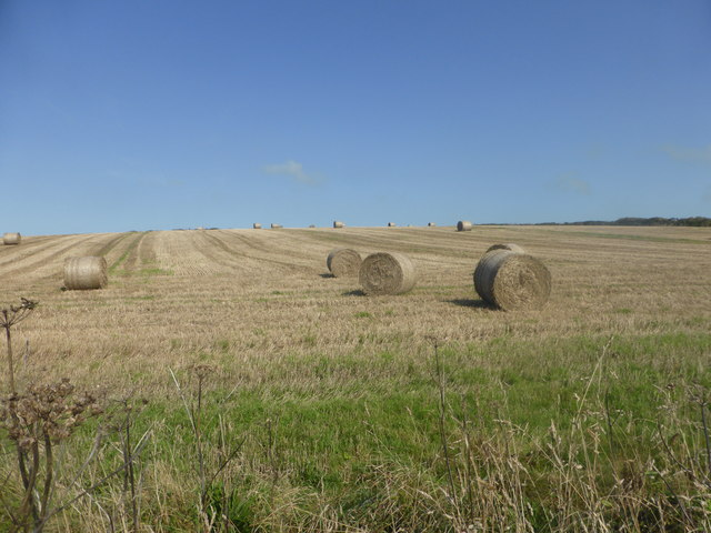Hay field at Higher Bosistow