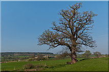 SO4430 : Kilpeck Castle earthworks by Ian Capper