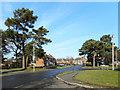 SU5862 : Pine Trees in Bishopswood Road by Des Blenkinsopp