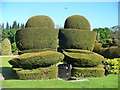 NO7396 : Crathes Castle - Topiary by Colin Smith