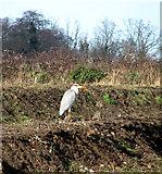TG3204 : A grey heron by Evelyn Simak
