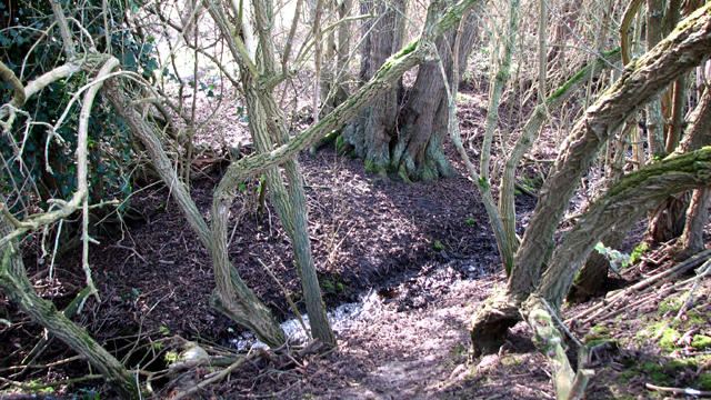 Drainage ditch on the northern edge of Low Common