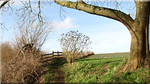 TG3204 : Public footpath past Lamb's Court by Evelyn Simak