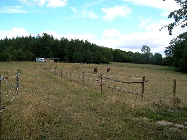 Pony paddocks at Collins End