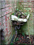 TG2909 : Weeds growing in an old wash basin by Evelyn Simak