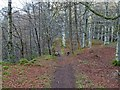NH8348 : Path next to the Allt Dearg by valenta