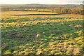 SP1920 : Field north of Little Rissington by Derek Harper
