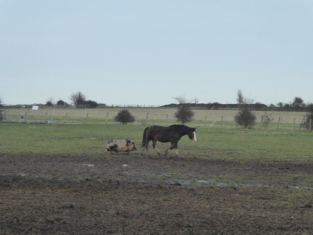Pig and horse at Swanley Farm