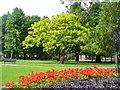 SU7139 : Alton - Public Gardens by Colin Smith