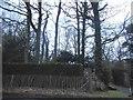 TQ3337 : Woodlands by Wallage Lane, Rowfant by David Howard