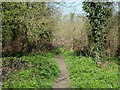 TQ2965 : Woodland path, Beddington Park by Robin Webster