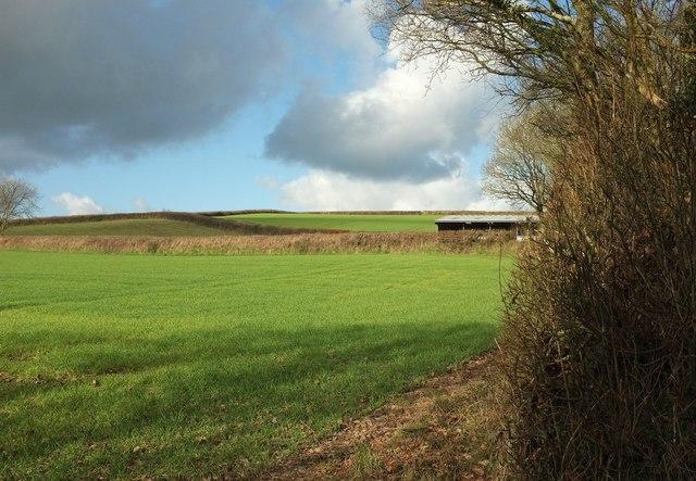 Fields at George Nympton