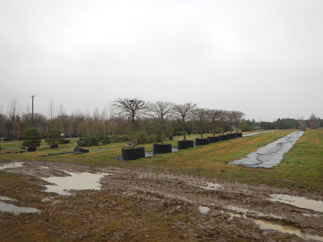 Potton - Deepdale Trees