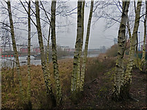 SK5802 : Trees next to the River Soar by Mat Fascione