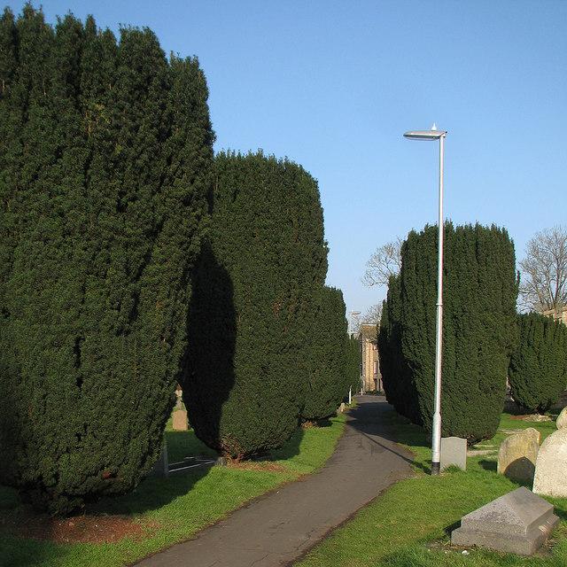 Chesterton: St Andrew's yews