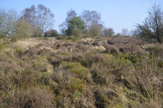 Brocton Camp - Possible hut bases