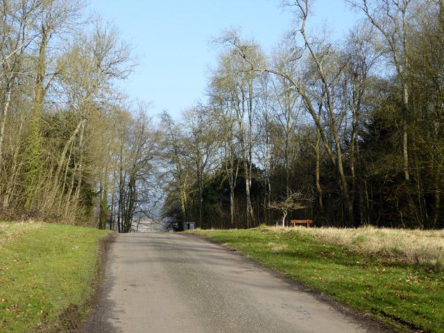 Lane through Ridges Plantation