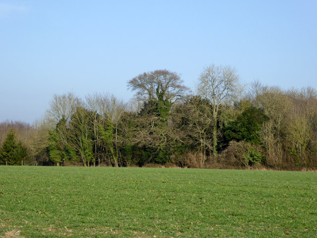 Part of Long Plantation