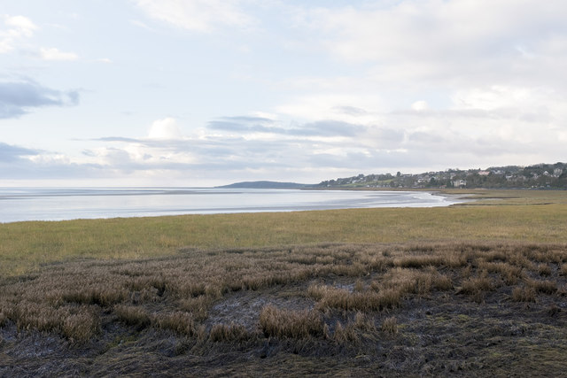 Spartina anglica at Blawith Point