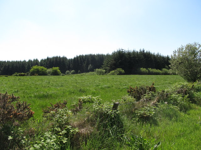 View across improved grassland to a forest plantation on Ballintemple Road