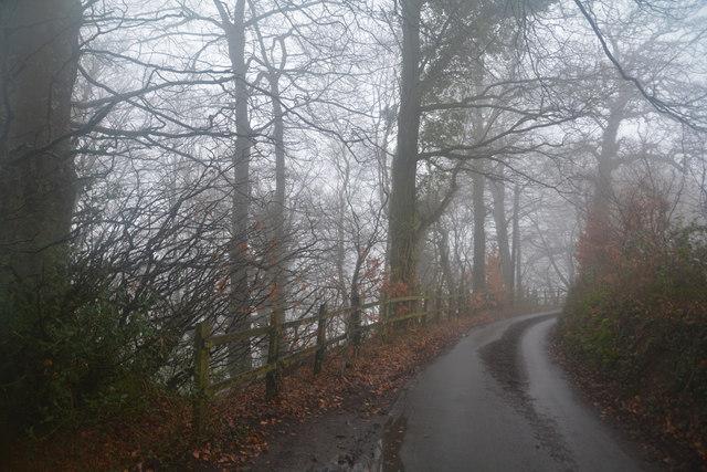 East Devon : Country Lane