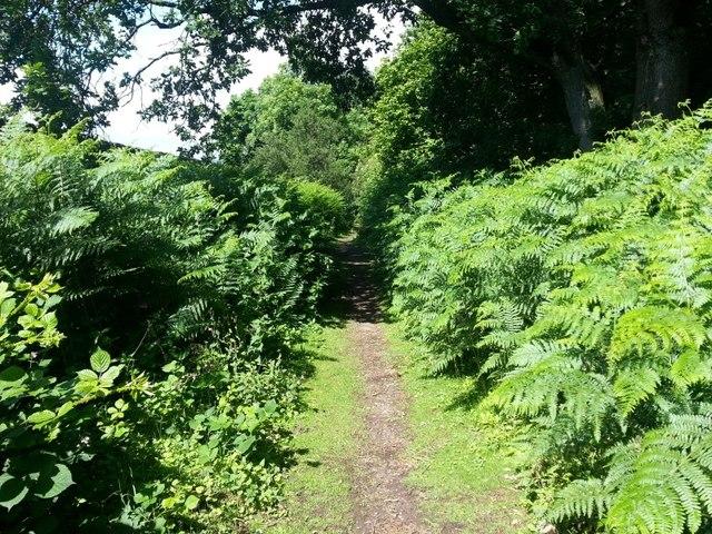 King's Park permiter path