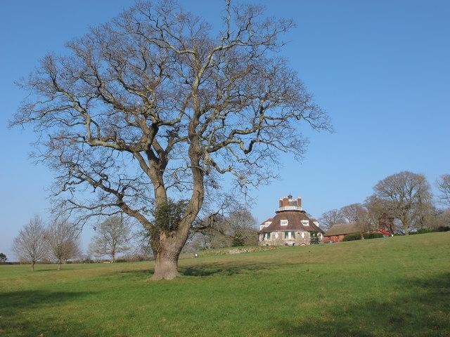 Oak tree at A la Ronde