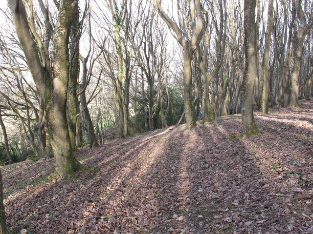 Wood on Salcombe Hill