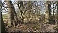 NU1930 : Tiny woodland by Richard Webb