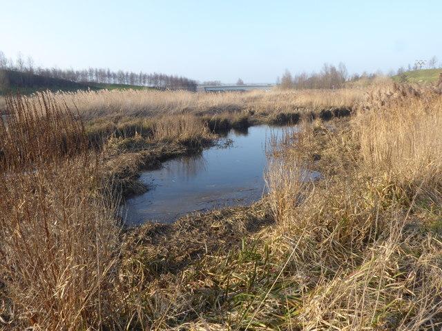 Wetland alongside the River Lea