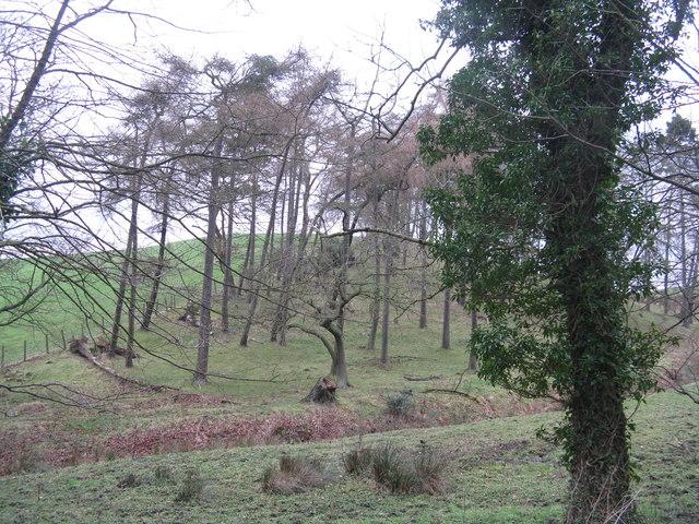 Trees near Chapel