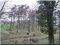 NT1685 : Trees near Chapel by M J Richardson