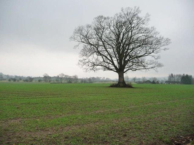 Winter tree at Dalton Fields