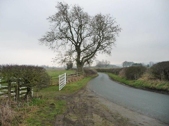 Winter tree alongside Low Lane