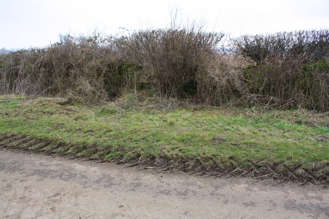 Hedgerow beside road from Fulbrook to Swinbrook