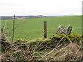 NT1786 : Mossy wall near Chapel by M J Richardson