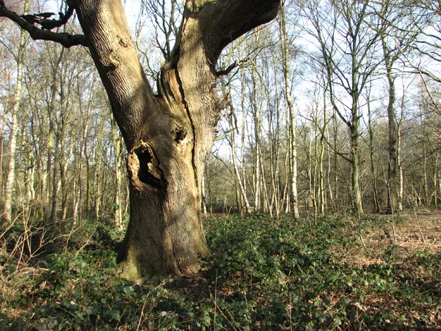 A bramble patch on Dunston Common