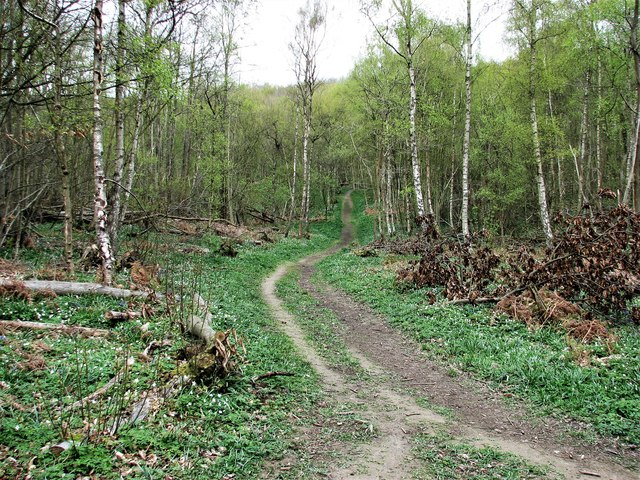 Ride in Guestling Wood