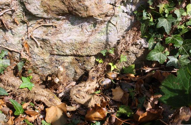 Benchmark behind ivy on corner of barn conversion, Colburn Lane