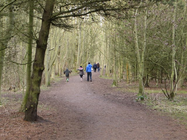 Woodland path, Rising Sun Country Park