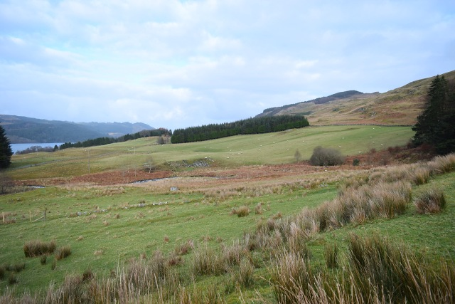 Fields above Finchairn Farm